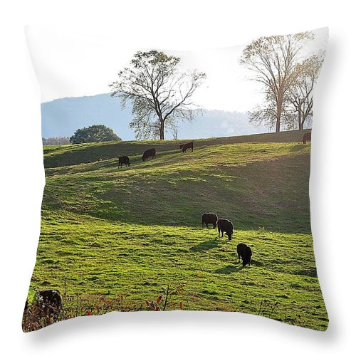 Landscapes Throw Pillow featuring the photograph Sun Shadows by Jan Amiss Photography