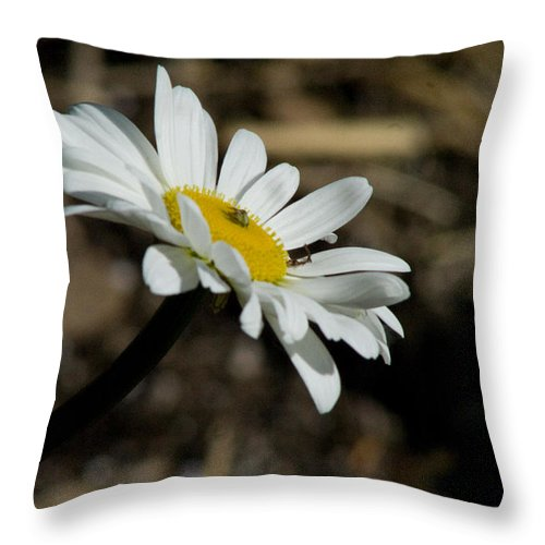 Flower Throw Pillow featuring the photograph Sunbathing On A Daisy by Martha Johnson