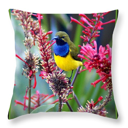 Animals Throw Pillow featuring the photograph Sunbird by Holly Kempe