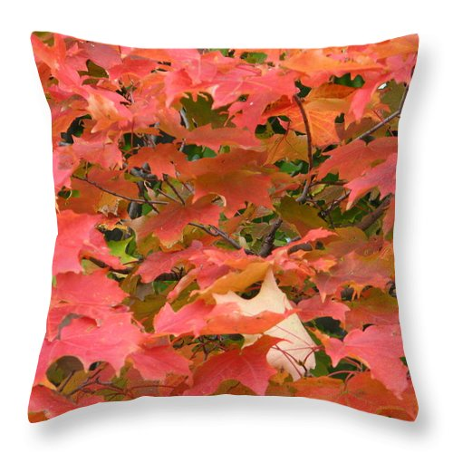 Leaves Throw Pillow featuring the photograph Sunburst by Kelly Mezzapelle