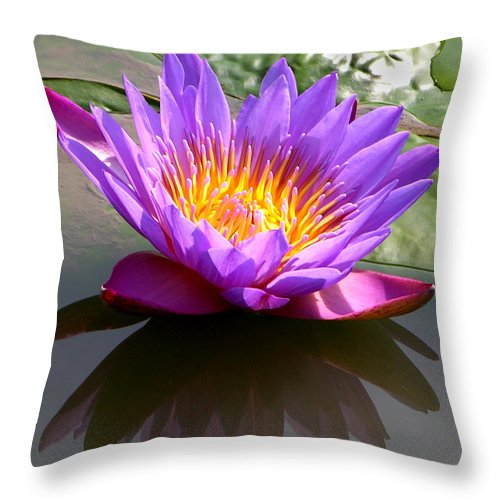 Water Lily Throw Pillow featuring the photograph Sunburst Lily by John Lautermilch