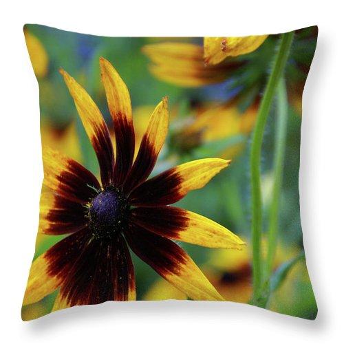 Flower Throw Pillow featuring the photograph Sunburst Petals by Linda Shafer