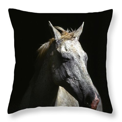 Horse Throw Pillow featuring the photograph Sundance by Jim Cazel