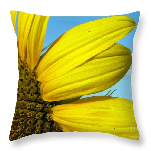 Sunflowers Throw Pillow featuring the photograph Sunflower by Amanda Barcon