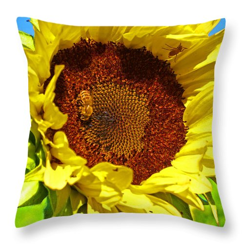 Pastoral Throw Pillow featuring the photograph Sunflower And Bee by Heather Coen