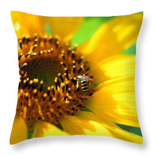 Bright Throw Pillow featuring the photograph Sunflower And Bee by Thomas Firak