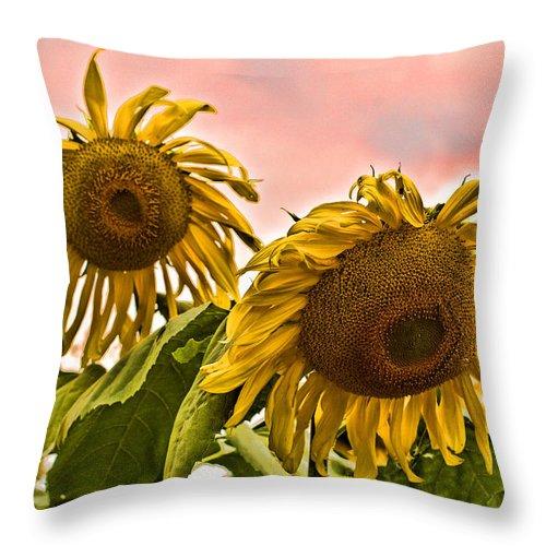 Sunflower Throw Pillow featuring the photograph Sunflower Art 1 by Edward Sobuta