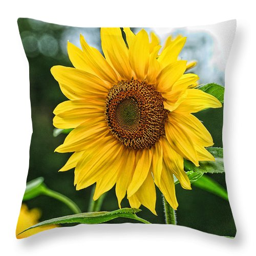 Sunflower Throw Pillow featuring the photograph Sunflower Art 3 by Edward Sobuta