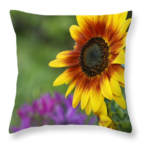 Sunflower Throw Pillow featuring the photograph Sunflower by JoJo Photography