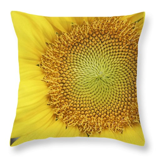 Sunflower Throw Pillow featuring the photograph Sunflower by Margie Wildblood
