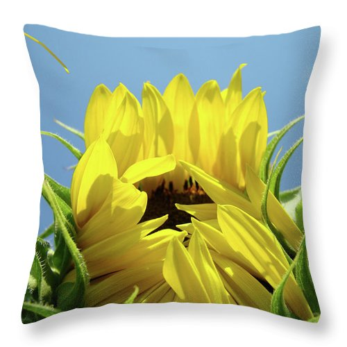 Sunflower Throw Pillow featuring the photograph Sunflower Opening Sunny Summer Day 1 Giclee Art Prints Baslee Troutman by Baslee Troutman