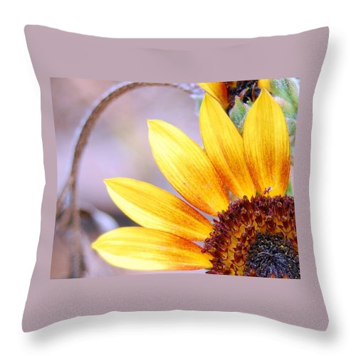 Sunflower Throw Pillow featuring the photograph Sunflower Perspective by Amy Fose