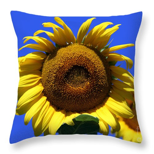 Sunflowers Throw Pillow featuring the photograph Sunflower Series 09 by Amanda Barcon