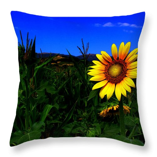Flower Throw Pillow featuring the photograph Sunflower by Silvia Ganora