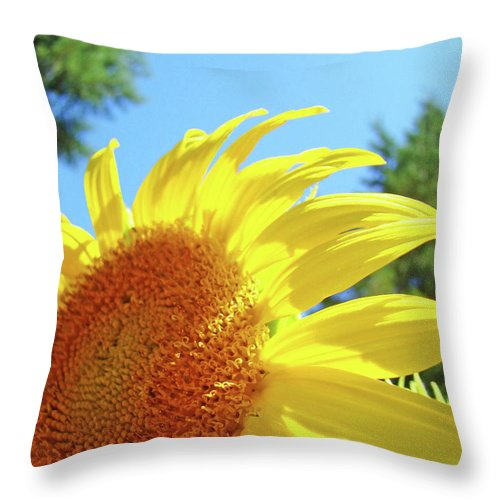 Sunflower Throw Pillow featuring the photograph Sunflower Sunlit Art Print Canvas Sun Flowers Baslee Troutman by Baslee Troutman