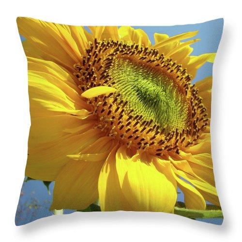 Sunflower Throw Pillow featuring the photograph Sunflower Sunlit Sun Flowers 6 Blue Sky Giclee Art Prints Baslee Troutman by Baslee Troutman