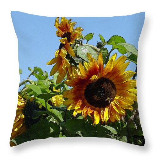 Sunflower Throw Pillow featuring the photograph Sunflower Trio by Suzanne Gaff