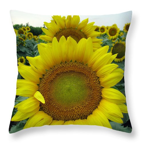 Sunflowers Throw Pillow featuring the photograph Sunflowers by Amanda Barcon