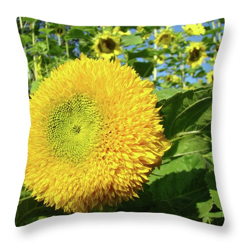 Sunflower Throw Pillow featuring the photograph Sunflowers Art Prints Sun Flower Giclee Prints Baslee Troutman by Baslee Troutman