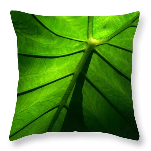 Green Throw Pillow featuring the photograph Sunglow Green Leaf by Patricia L Davidson