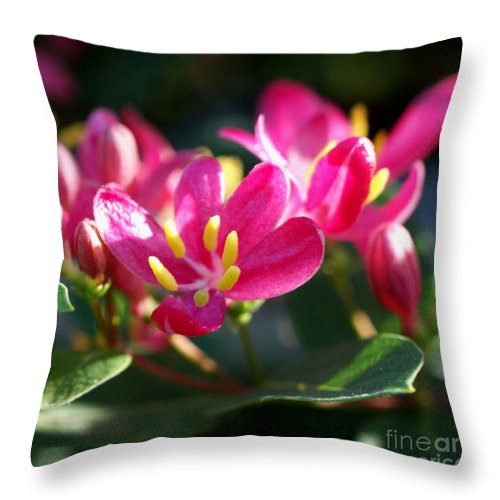 Pink Throw Pillow featuring the photograph Sunkissed by Valerie Fuqua