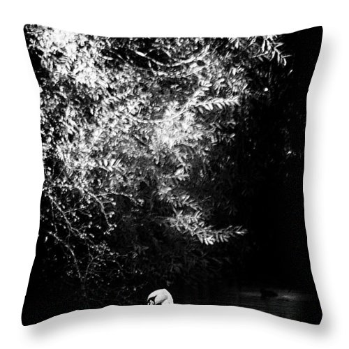Wildlife Throw Pillow featuring the photograph Sunlight And Swan by Cliff Norton