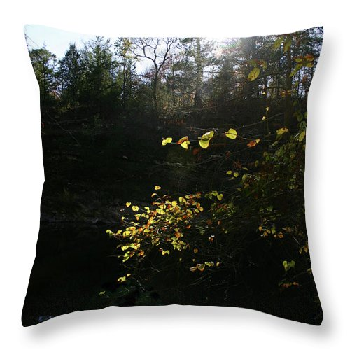 Gold Throw Pillow featuring the photograph Sunlight At The River by Nina Fosdick