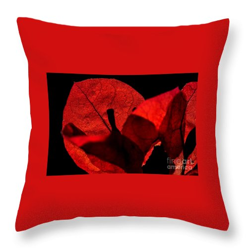 Photography Throw Pillow featuring the photograph Sunlight Behind The Petals by Kaye Menner