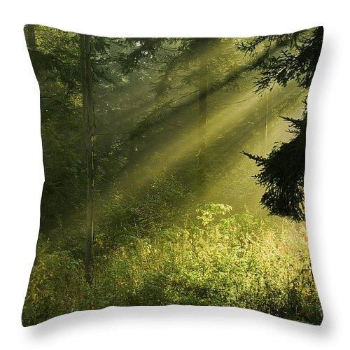 Nature Throw Pillow featuring the photograph Sunlight by Daniel Csoka