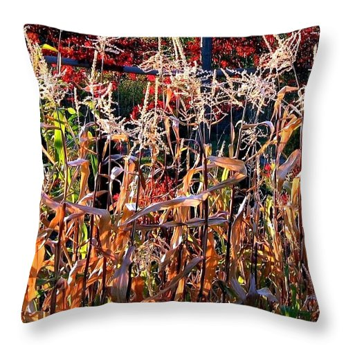 Fall Throw Pillow featuring the photograph Sunlit Fall Corn by Will Borden