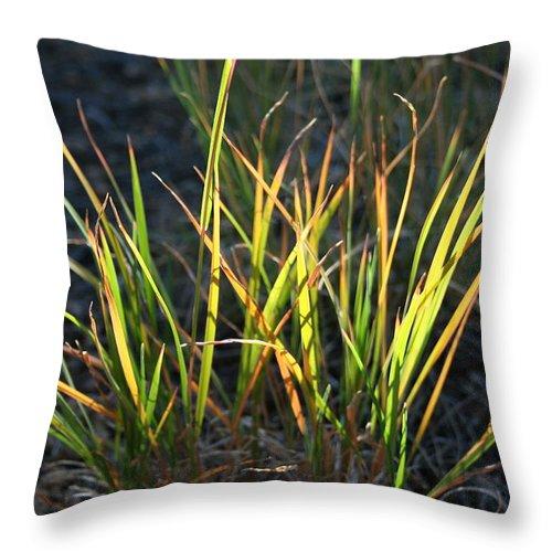 Grass Throw Pillow featuring the photograph Sunlit Grass by Ric Bascobert