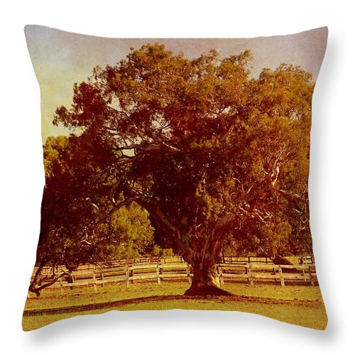 Trees Throw Pillow featuring the photograph Sunlit Landscape by Georgiana Romanovna