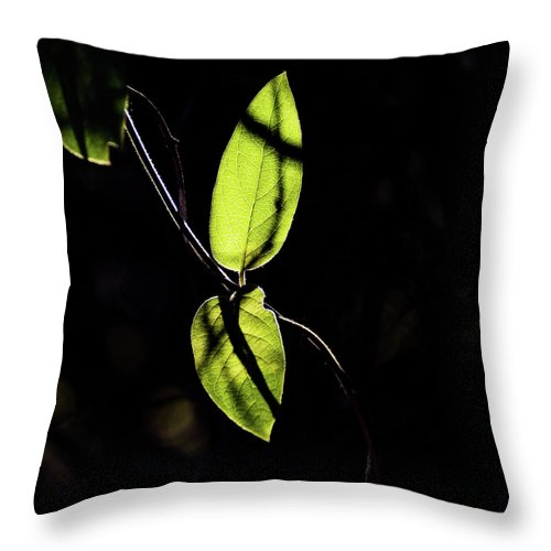 Jay Stockhaus Throw Pillow featuring the photograph Sunlit Leaves by Jay Stockhaus