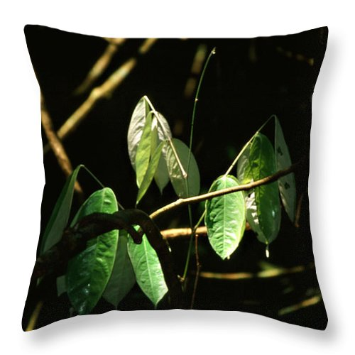 Leaves Throw Pillow featuring the photograph Sunlit Leaves by Kathy McClure