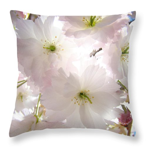Blossom Throw Pillow featuring the photograph Sunlit Pink Blossoms Art Print Spring Tree Blossom Baslee by Baslee Troutman