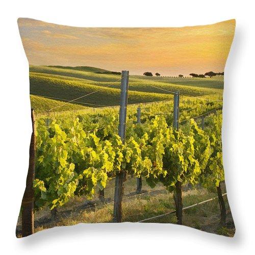 Vineyard Throw Pillow featuring the photograph Sunlit Vineyard by Sharon Foster