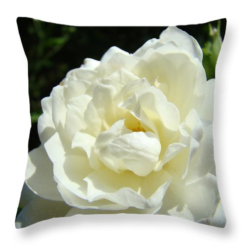 Rose Throw Pillow featuring the photograph Sunlit White Rose Art Print Floral Giclle Print Baslee Troutman by Baslee Troutman