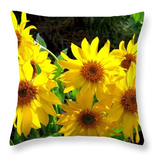 Wildflowers Throw Pillow featuring the photograph Sunlit Wild Sunflowers by Will Borden