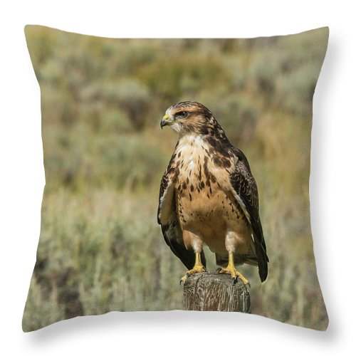 Hawk Throw Pillow featuring the photograph Sunning In The Afternoon by Yeates Photography