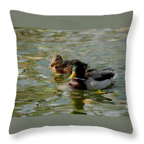 Nature Throw Pillow featuring the photograph Sunny Mallard Ducks by D Nigon