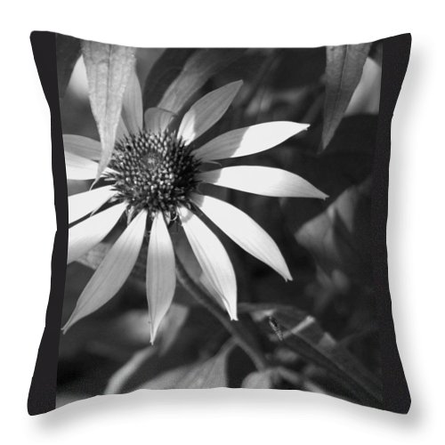 Plant Throw Pillow featuring the photograph Sunrays by David Dunham