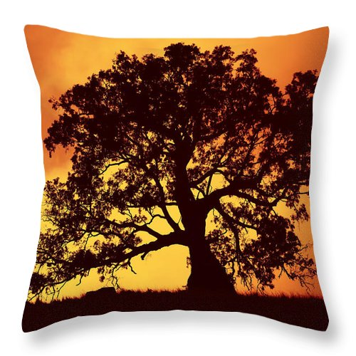 Gum Tree Throw Pillow featuring the photograph Sunrise Gum by Mike Dawson