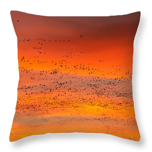 Migration Throw Pillow featuring the photograph Sunrise Migration by Randall Ingalls
