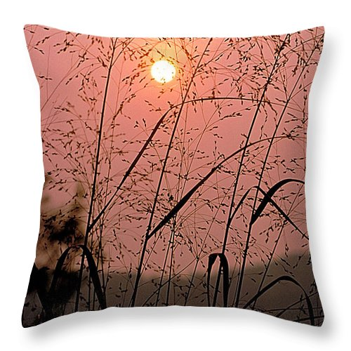 Sun Throw Pillow featuring the photograph Sunrise Through The Tall Grass by Thomas Firak