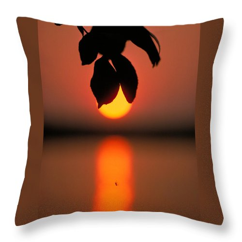 Sunset Throw Pillow featuring the photograph Sunset And Spider by Thomas Firak