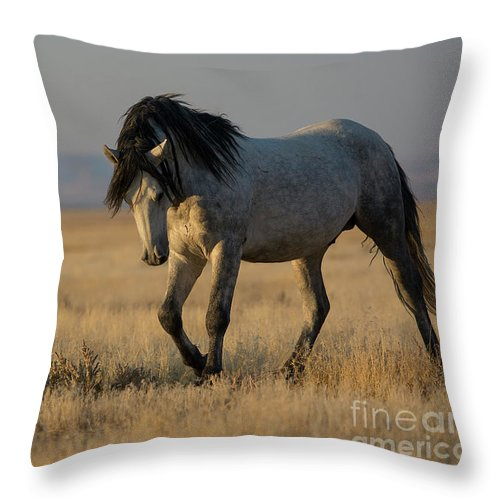 Nikon Throw Pillow featuring the photograph Sunset Strength by Nicole Markmann Nelson