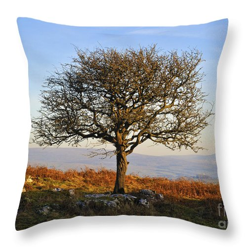 Tree Limestone Crags Throw Pillow featuring the photograph Sunset Tree. by Stan Pritchard