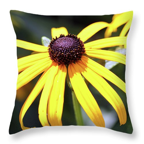 Flowers Throw Pillow featuring the photograph Sunshine Flower by Mary Haber