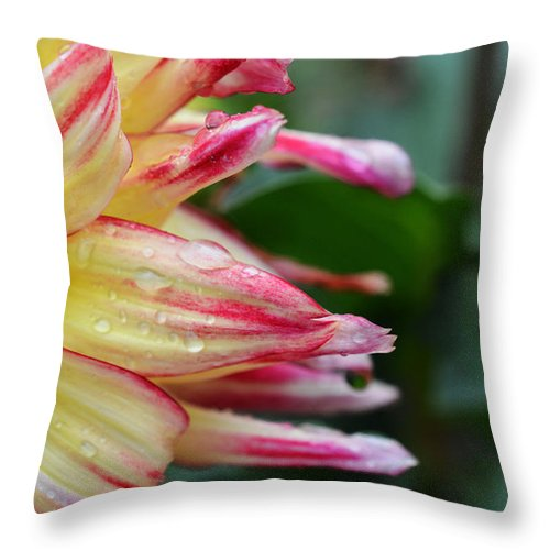 Dahlia Throw Pillow featuring the photograph Sunshine On A Rainy Day by Richard Andrews