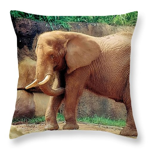 Animals Throw Pillow featuring the photograph Sunshine On My Shoulders by Jan Amiss Photography